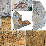 An unexpected noncarpellate epigynous flower from the Jurassic of China